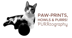 purrtography-logo-f-brown-01
