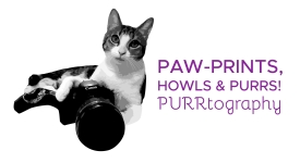 purrtography-logo-f-purple-01